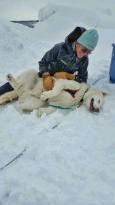 All Seasons Adventures dog sledding