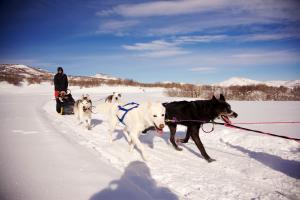 Dog Sled Rides Park City