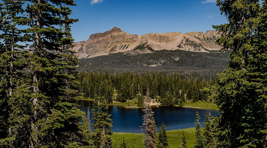 Uinta National Forest