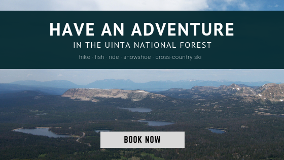 uinta national forest adventures