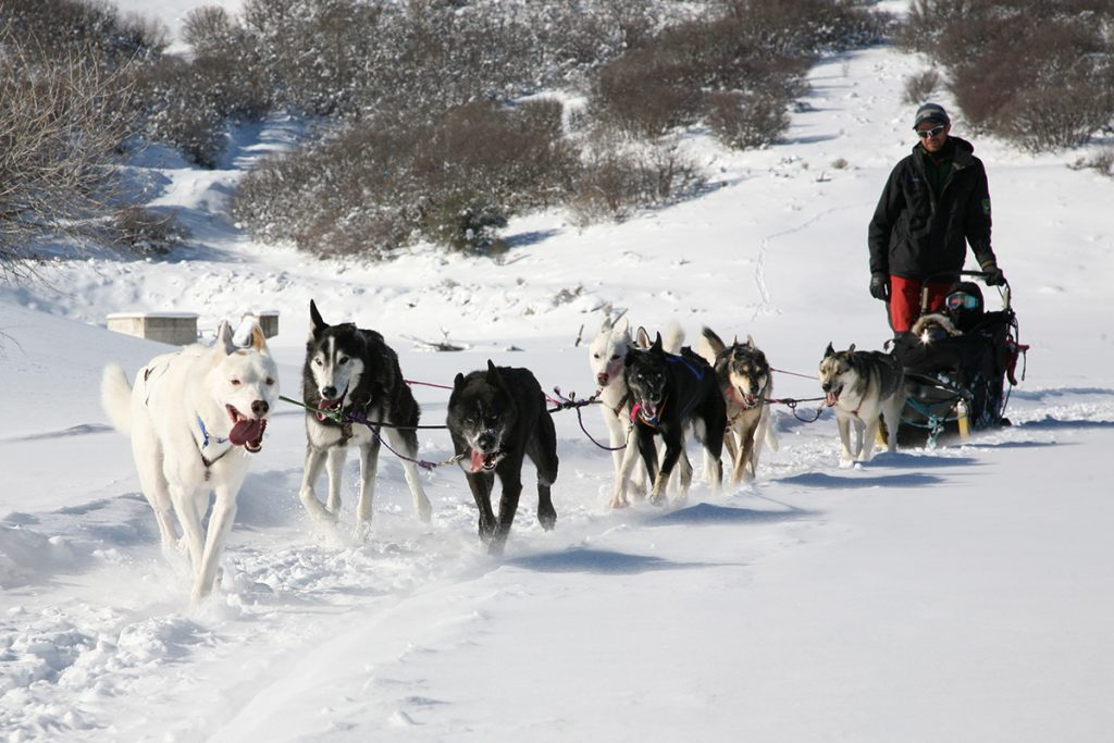 Park City Dog Sled Tours