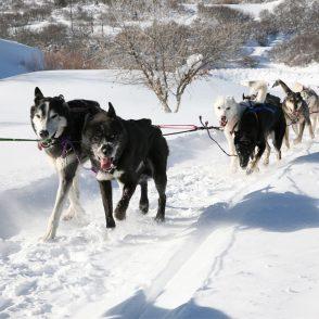 Dog Sled Park City