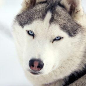 Huskies Park City Utah