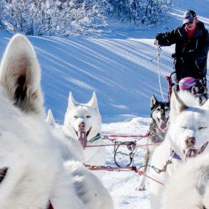 Salt Lake Dog Sledding