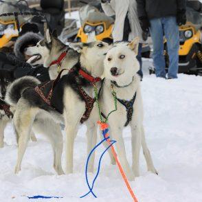 Dog Sledding Utah