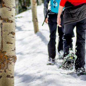 snowshoeing-aspens-closeup