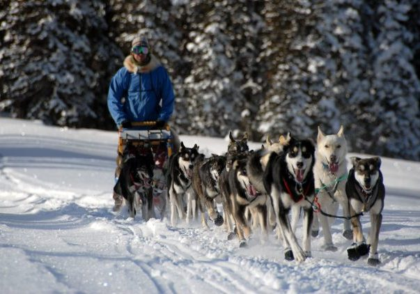 Dave-dogs-race-dogsled-Marquee-RS