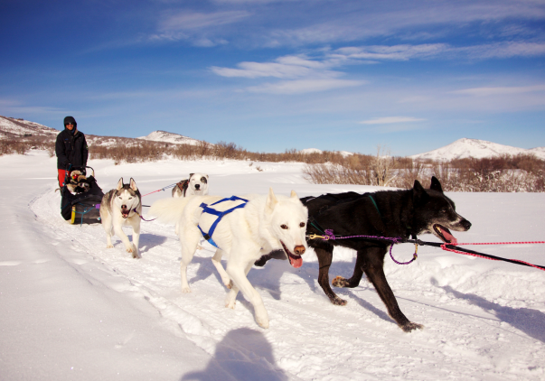 Dog Sledding PC