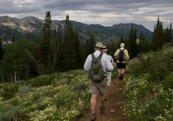 Hiking in the Uinta National Forest