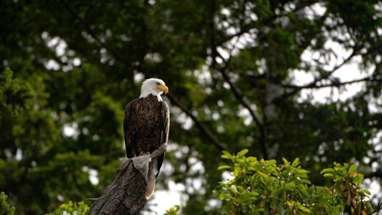 Park City Bird Watching
