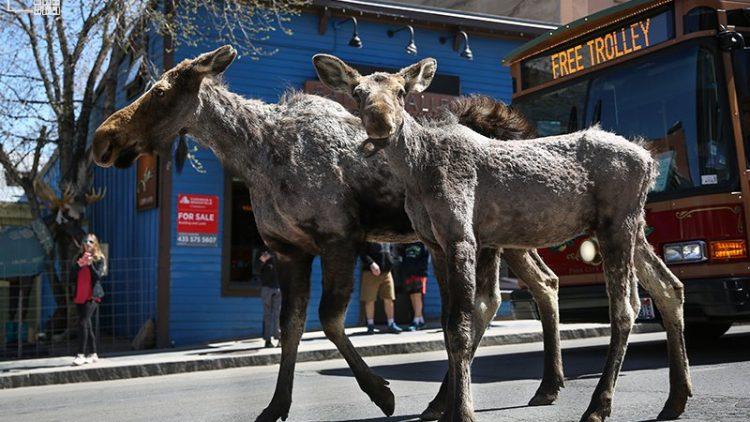 Moose Park City